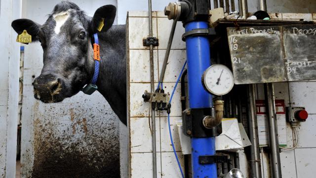 boete-nederland-wegens-melkquota